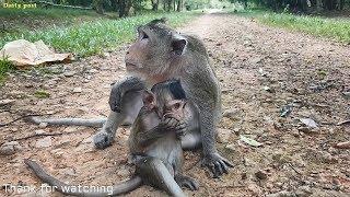 Lizzy monkey and her big baby Leo very lovely, cute baby monkey Leo and his mother video
