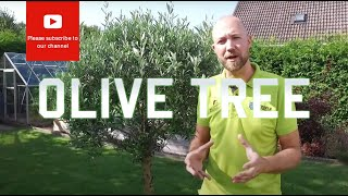 All you need to know about Olive tree (Olea europea)