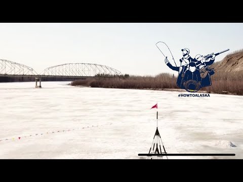 LIVE: Nenana Ice
