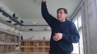 Совет от Гагика 61.Насморк,хрип,кашель и про Армянских бойных голубей.24.11.17г.
