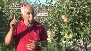 IĞDIR KAYISI: Bayraktutan köyü Osman Engindeniz, Gündüz yıldırım, Himmet taşdemir