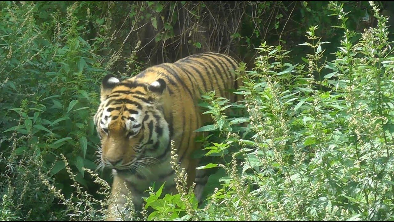 Tiergarten Schönbrunn Vienna Zoo Youtube