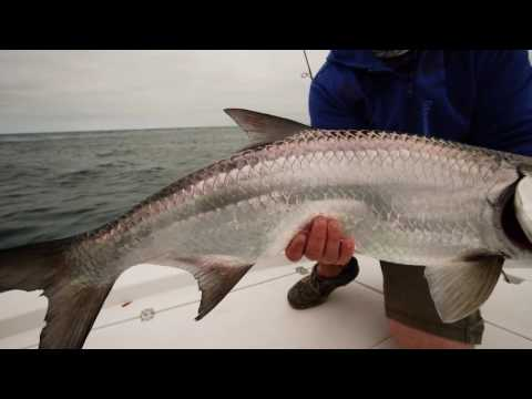 Tarpon and Snook out of Stuart Florida on the 2/0 Big Gun hook