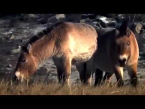 NAT GEO WILD: animales salvajes