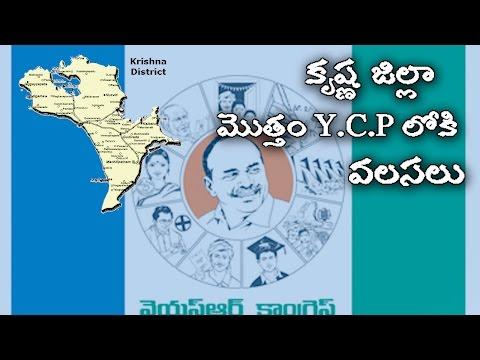 కృష్ణ జిల్లా మొత్తం Y.C.P  లోకి వలసలు  Krishna Jilla Mottam YCP Loki Valasalu   Political punch