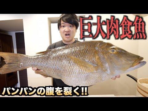 巨大肉食魚をさばいたらいろいろと驚きの連続だった件。。。