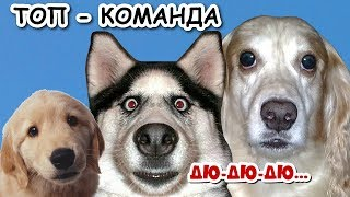 Топ - команда. Человек собаке друг