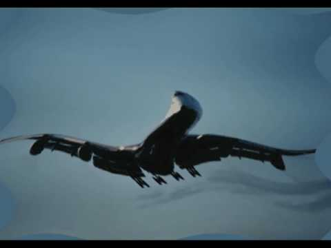 Hrithik Roshan's Private Plane