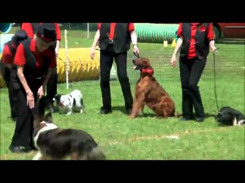 Five Flags Dog Training Club's Bark-ettes of Broadway