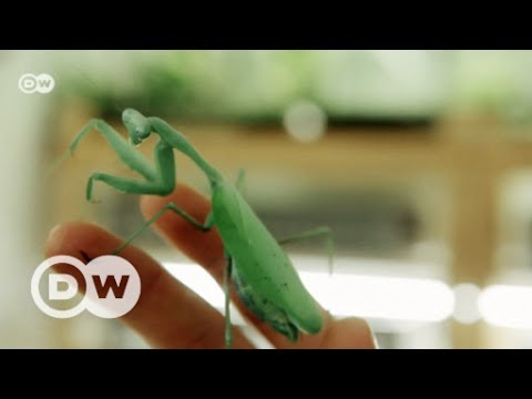 Want to meet a bug collector? | DW English
