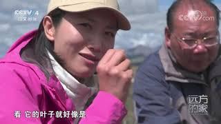 [远方的家]大好河山 横断山——海子山| CCTV中文国际