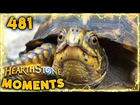 Don't Underestimate Turtle Power!! | Hearthstone Daily Moments Ep. 481