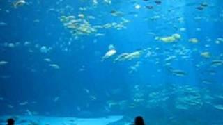 The largest aquarium in the world!  The Georgia Aquarium.
