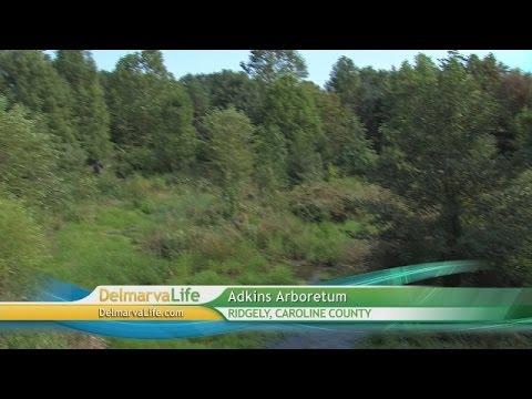 Tuesday, September 9, Segment 4 – Adkins Arboretum