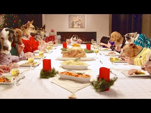 Thumbnail: Freshpet Holiday Feast - 13 Dogs and 1 Cat Eating with Human Hands