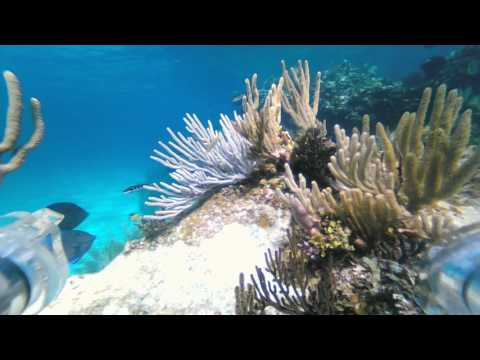 Troop 22 OpenROV Dive # 5  (ocean reef)