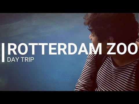 Rotterdam Best Things To Do - Diergaarde Blijdorp / Rotterdam Zoo | Netherlands | Europe