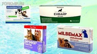 Таблетки для собак от глистов | Как давать.