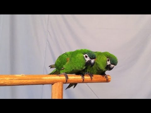 The Talking Birds of Shuka Vana