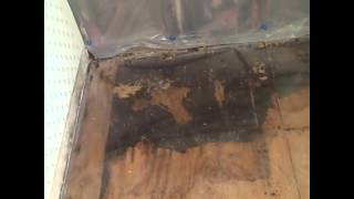 Free Mold Removal Salt Lake City Utah Info | Mold Remediation Help
