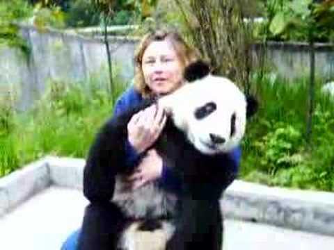 Panda at Wolong