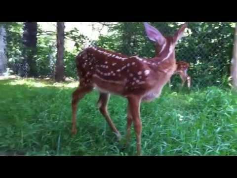 wild-animals-+-montreal-canadians!