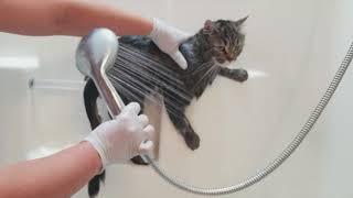 помыть кота?  Наш кот боится воды !