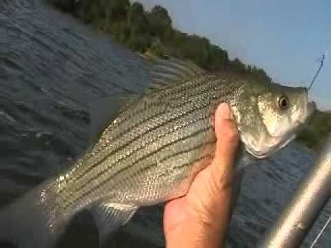 Walleye striper flathead catfish channel catfish and for Clinton lake il fishing report