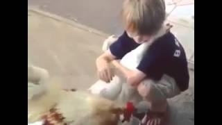 Супер мега ржачный прикол  мальчик обнимает курицу