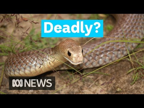 Does Australia have the most venomous creatures in the world? | Did You Know?