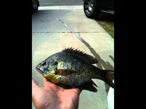 Otay lake fishing youtube for Otay lakes fishing