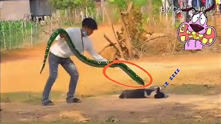 Fake Anaconda Prank Dogs Funniest Dogs ? Scared Try To Not Laugh ? Dogs Barking Of Fear