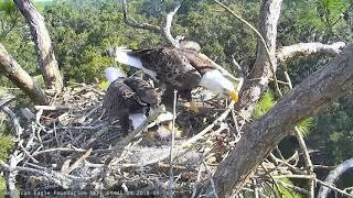 AEF NEFL Eagle Cam 9-16-18: The Challenge