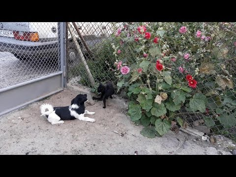 Cute Puppy Playing With Cat