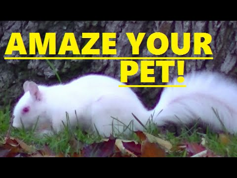 AMAZING Little Squirrels For Cats and Dogs to Watch ' GET THAT SQUIRREL '
