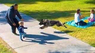 【犬が守る】犬が🐶人間の赤ちゃんを守ろうと必死な映像 👶!