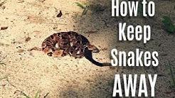 How to Keep Snakes Out of Your Yard This Summer