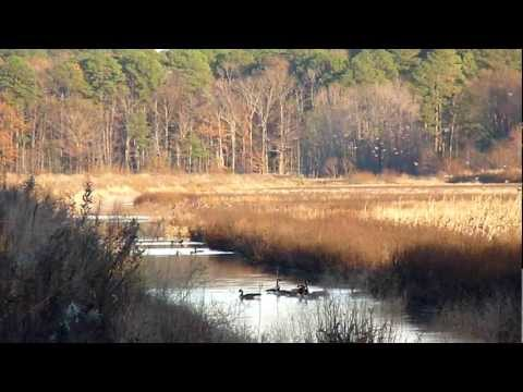 Blackwater National Wild Refuge.