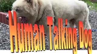 Funny Dog Barking Video.my Old Dog Has Barked Like A Human Talking Since Puppy Dog !