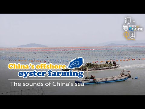 China's offshore oyster farming: The sounds of China's sea