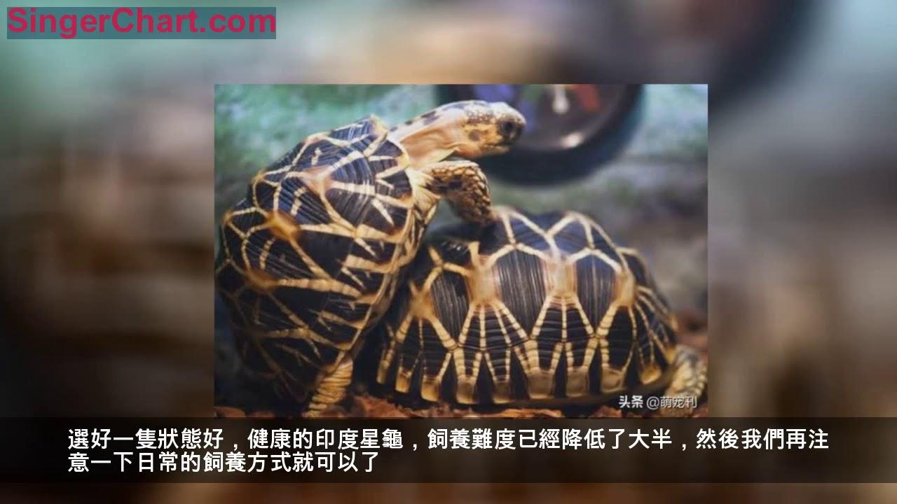 印度星龜讓很多新手龜友望而卻步。其實並沒有那麼難養 - YouTube