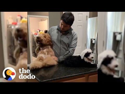 80-Pound Dog Thinks He's A Big Baby | The Dodo