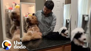 80-Pound Dog Thinks Hes A Big Baby | The Dodo