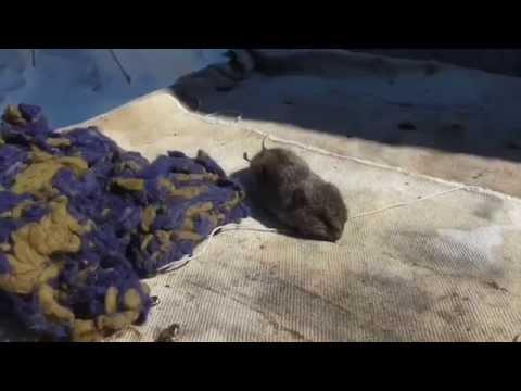 Мыши в улье