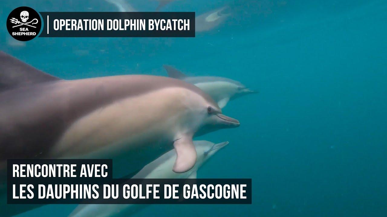 Rencontre avec les dauphins du Golfe de Gascogne !
