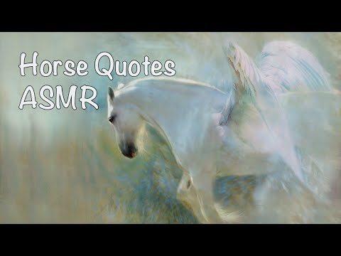 sleep-asmr-soothing-whispers-with-horse-quotes