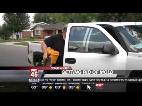 SCAM ALERT: Making Sure Your Mold-Removal Company is Reputable