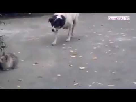 Cat attack the dog..