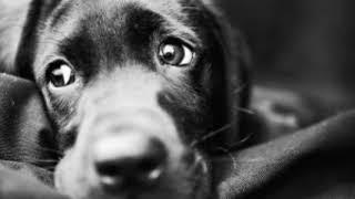 НА СМЕРТЬ СОБАКИ Евгений Евтушенко. Посвящяю свое прочтение бездомным собакам... Любите животных!..