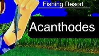 Let's Play: Fishing Resort Wii, Acanthodes